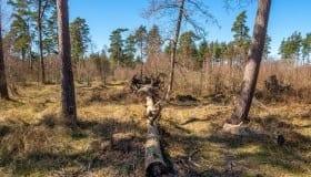 Bøtø_naturpark_2020-5-of-20