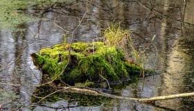 Fra Frejlev skov på Lolland