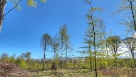 Merritskoven på Lolland