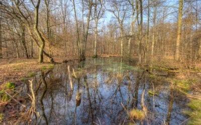 Frejlev skov